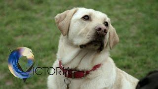 The dogs trained to spot cancer- BBC News
